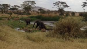 Ngorongoro - Serengeti